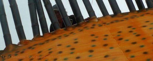 P1920147 rycardo iguana