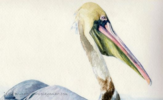 (detail - watercolor) - Pelican study