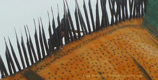 P1920151 rycardo iguana.9jpg