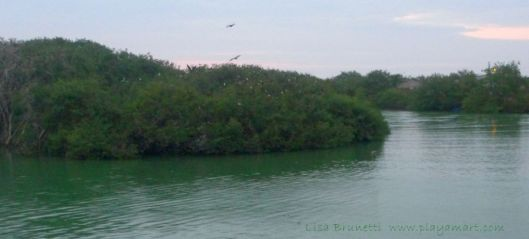 P1920521 rio jama egrets frigates pelicans