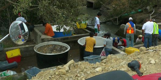 The trees provided shade, stabilized the bank and provided habitat for wildlife. (Shrimp harvest)