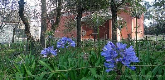 P1570684 guachala gardens astromeria