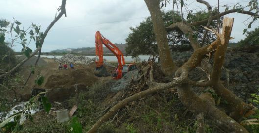 What's the loss of a few more mangroves to a monster-eater like this machine?