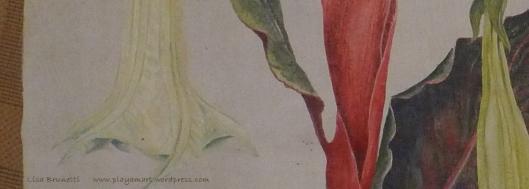 (Detail: Datura/Floribunda/Reina de la Noche/Angel's Trumpet)