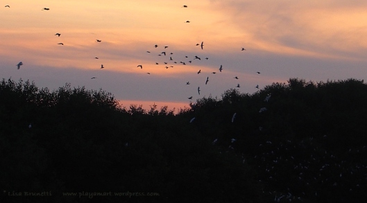 Birds coming home to roost - Rio Jama near Ecuador's Pacific Coast.