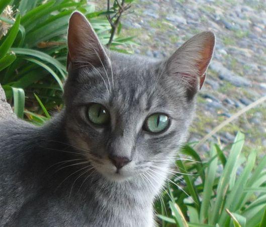 P1850880kat eyes guachala
