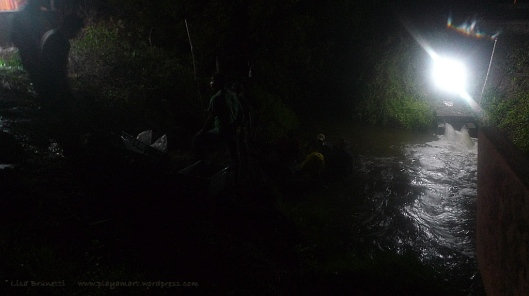 P1930310 night shrimp harvest