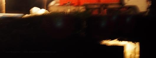 P8020019 night glow shrimp harvest