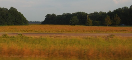 Soybeans near Clarksdale
