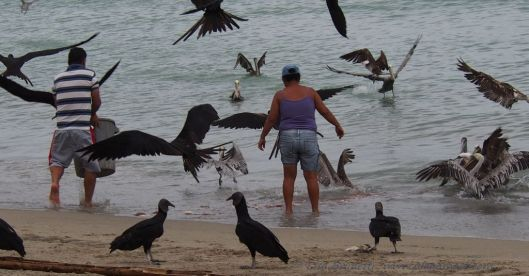One sometimes forgets about the ocean's wrath wen surrounded by so many birds.