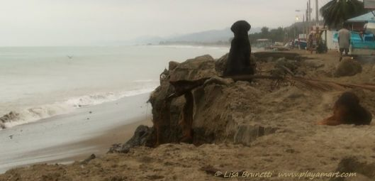 The waves captivated the dogs' interest as well...