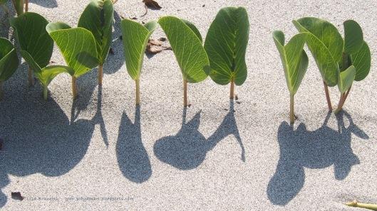PB070586 beach shadows