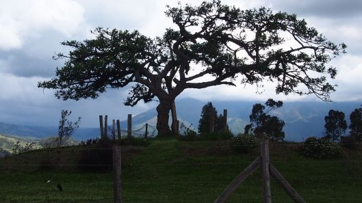 Lechero - Sacred Site on man-made hill overlooking Lago San Pablo.