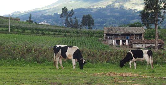Near Otavalo Ecuador