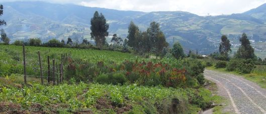 An afternoon trek between Otavalo and Volcano Imbabura (Ecuador)