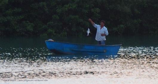 """He called these fish """"Raspara Balsa"""""""