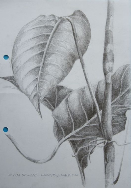 """Foliage - Mindo Memories"" pencil  I recall sitting on the restaurant steps as I waited on friends to arrive.  A little dog crept up from behind and nudged my ear.  The owner, sitting behind, suddenly chuckled s I stopped drawing and gave the little puppy some attention."