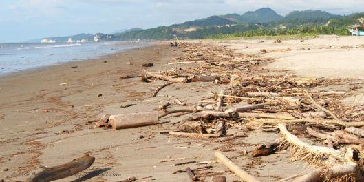 New driftwood  supply at La Division!