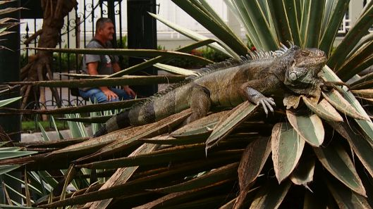 Inspiration from Iguana Park (Guayaquil)