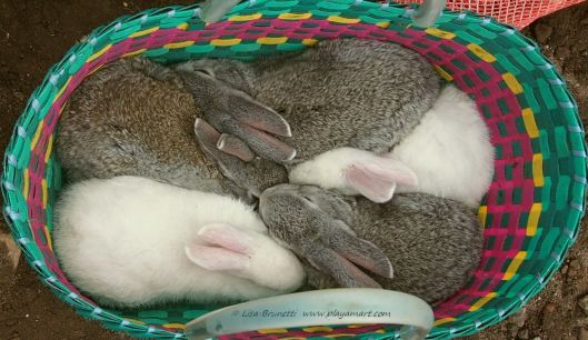 (Ecuador) Otavalo Market - Rabbits