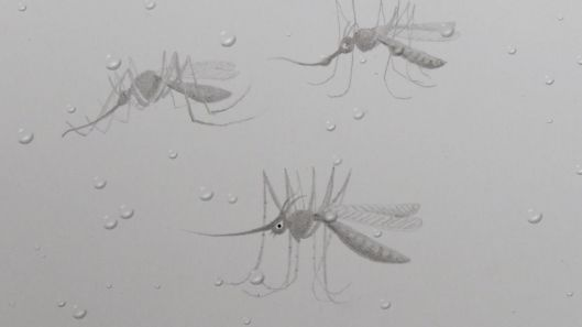25143348 pencil mosquito rain drop