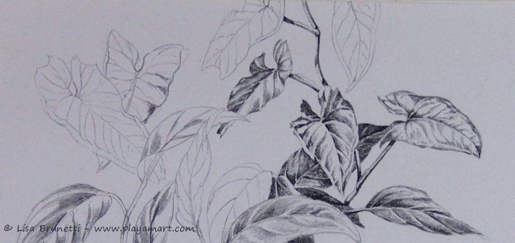 Foliage pencil