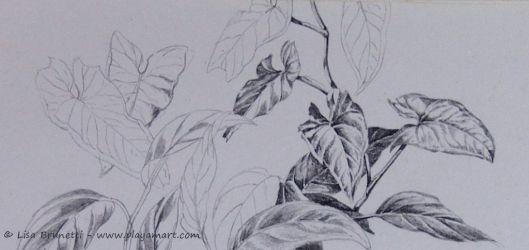 Foliage - Pencil