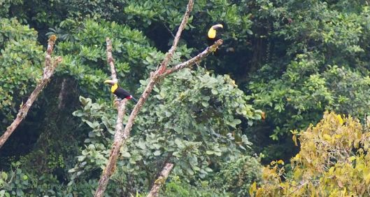 How's this for a view from my friends' front porch?  Yes, those are toucans!