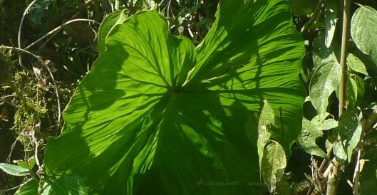 P1870527 foliage mindo