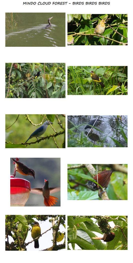 RIO CINTO PROPERTY BIRDS BIRDS BIRDS 01