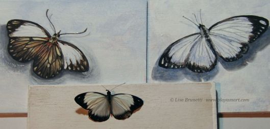 Working from a photo on the painting on the right, I was pleased to find a perfect (dead) butterfly in the road!