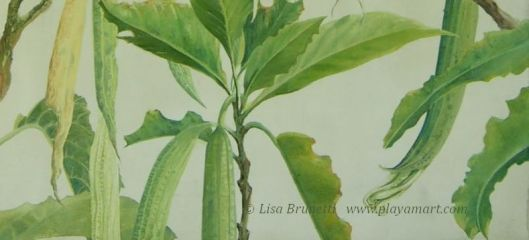 Angels Trumpet 01 - Detail