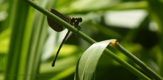 Capturing dragonflies is a tough request, butall things are possible on a magic carpet ride!