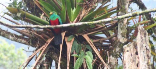 Quetzal Corner
