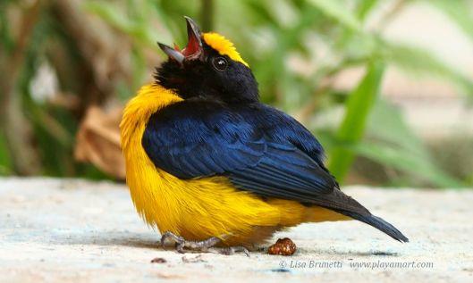 I like - BIRDS!