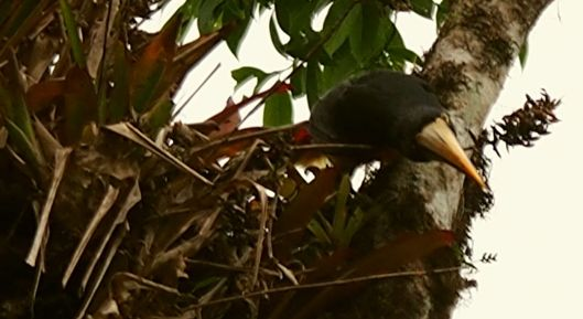 """Aracari landed at the front of the house as if to ask, """"What in the word are you doing, Gringita?"""""""