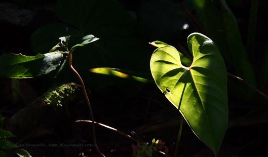 2C062954 foliage glow small file