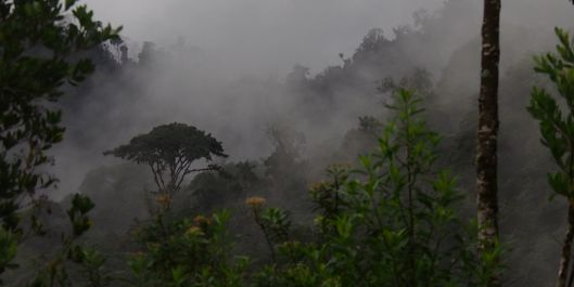 Dawn awakenings in Ecuador's cloud forest.