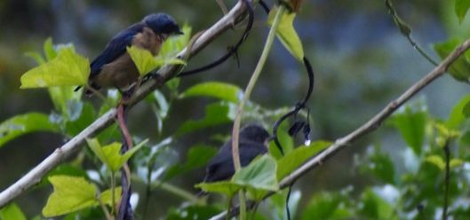 2B070749 swallows different swalow