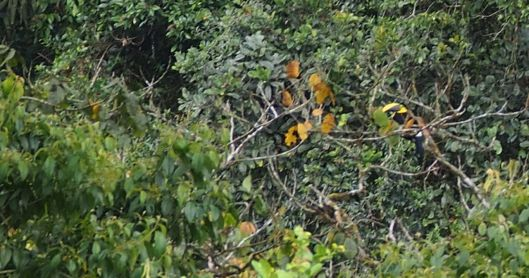 Can you find the toucan? Ivan's 8-year old son spotted the toucan from the porch! He is already a great guide!