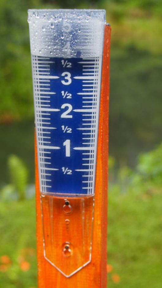 Thank you, Barbara, for the easy-to-read rain gauge. True to Nature, there's a surprise behind the gauge...