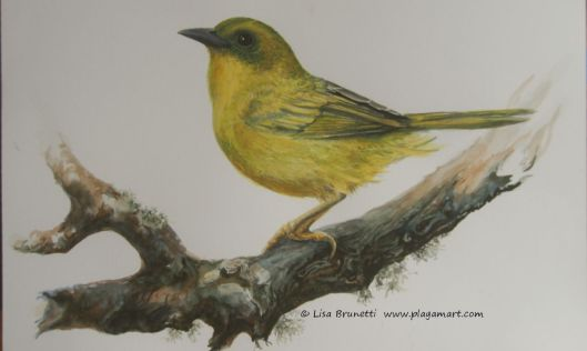 Not completely finishe, it is waiting for a different color of yellow pigment and more attention to the wings.