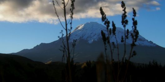 Not far down the road was a harvested quinoa field with a few sprigs left to frame Chimborazo.
