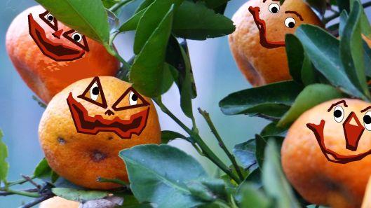 P1530126 mandarina pumpkins