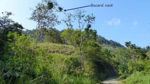 P1680282 becard nest