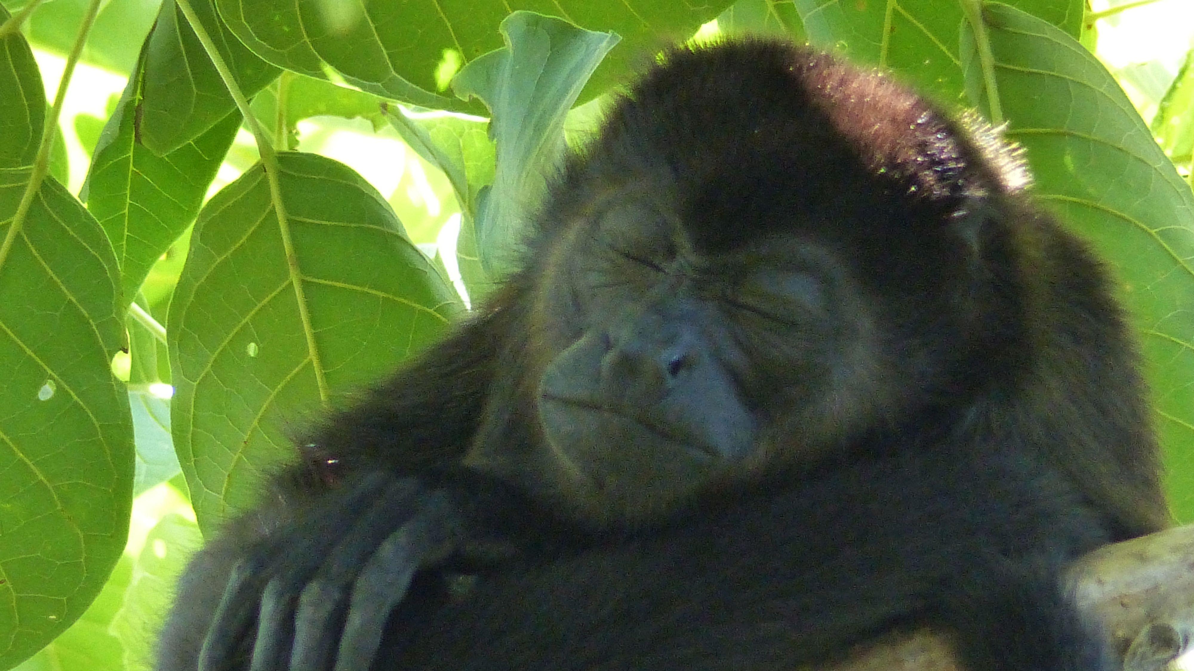 P1430715 MONKEY SLEEPING