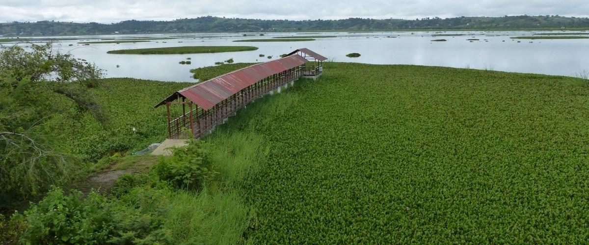 Humedal_La_Sabana - La Segua Wetlands