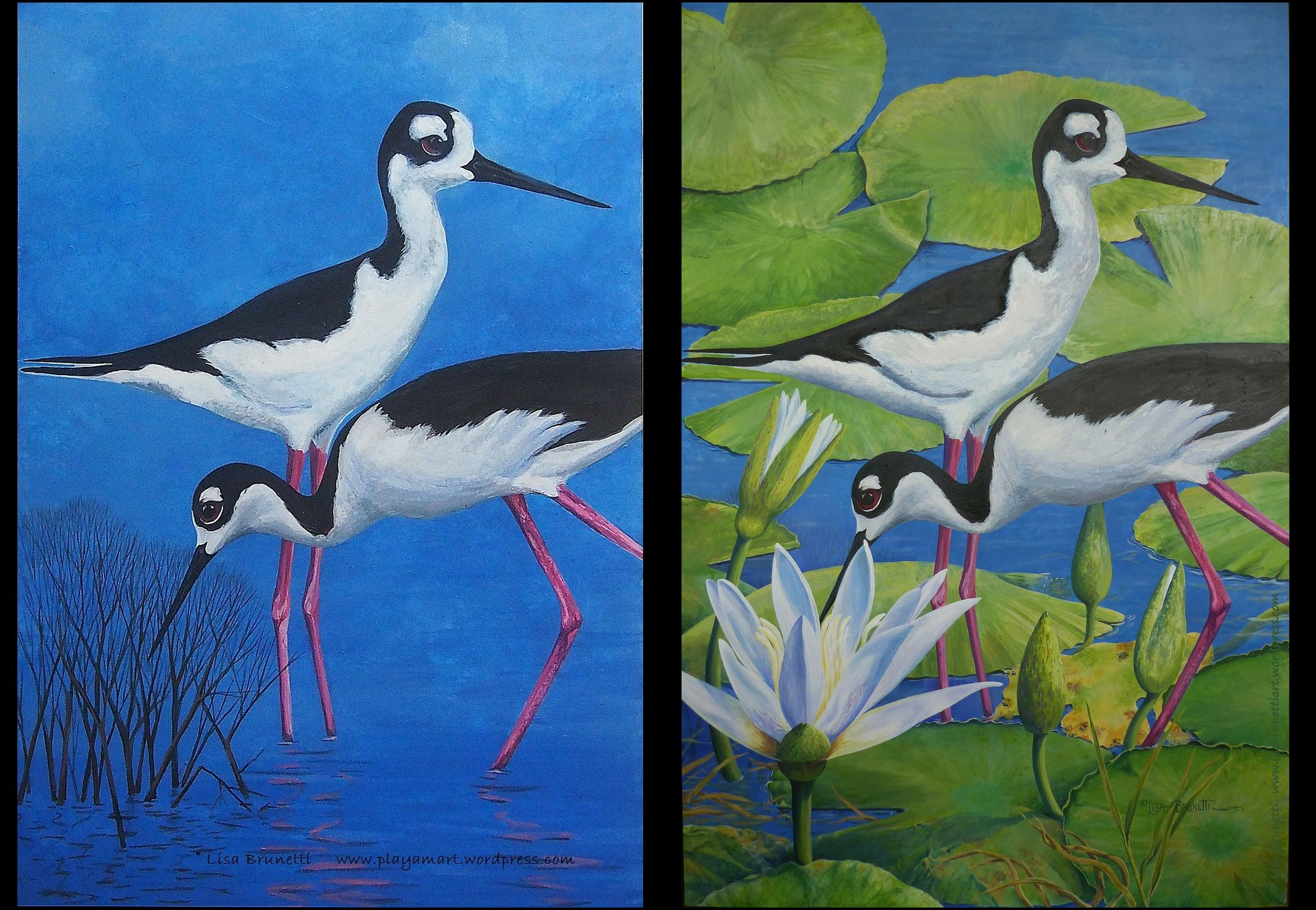 BLACK NECKED STILTS IN WATER LILIES - ACRYLIC