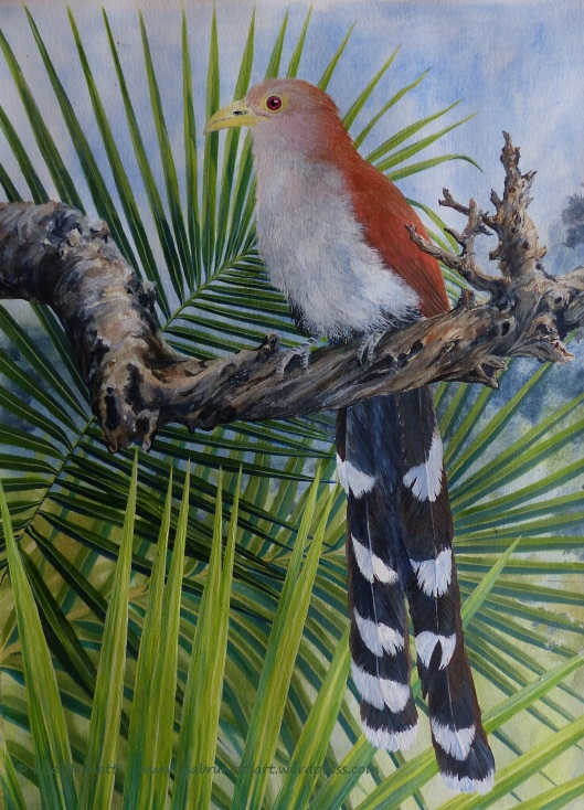 P2070371 squirrel cuckoo acrylic