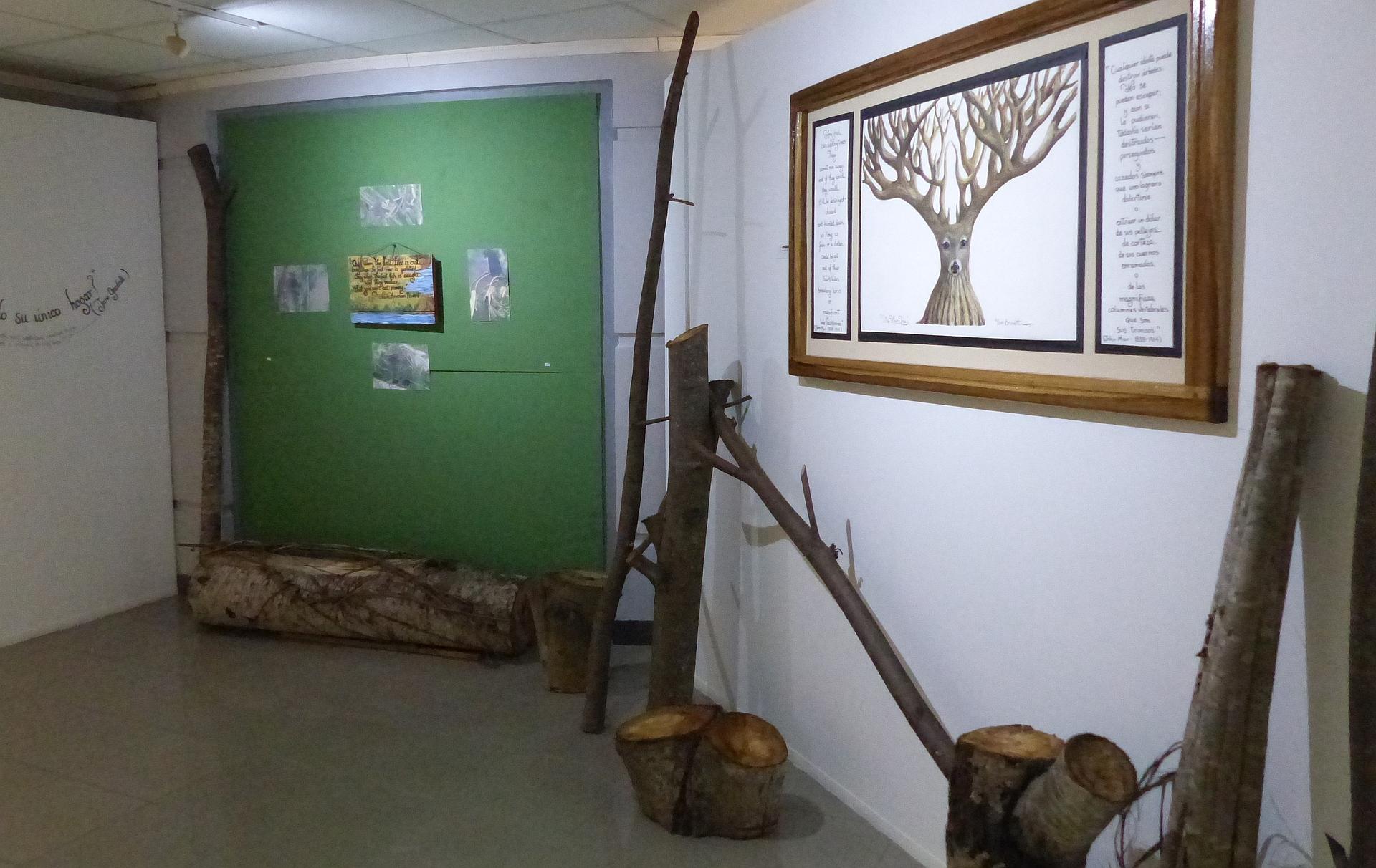 P2270431 ceibo finale y muir tree